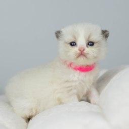 Rosa halsband 3,5 vecka gammal