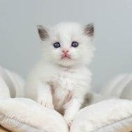 Quinn 4,5 vecka gammal
